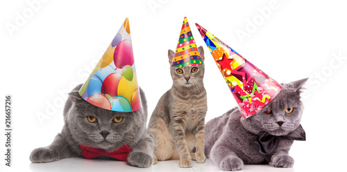 Leinwandbild Motiv three funny birthday cats with colorful caps looking bored