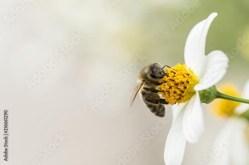 In de dag Bee pszczoła zbierająca pyłek z kwiatów