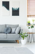 Quadro Plants next to grey couch in bright apartment interior with black and white posters. Real photo