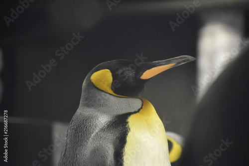 Foto Spatwand Pinguin Penguin