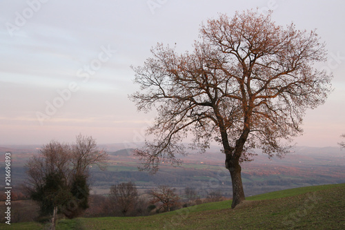 Fotobehang Toscane Winter in Tuscany