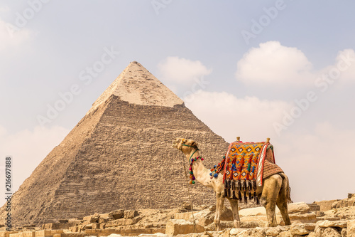 Fototapeta Camel near pyramids and ankh in desert.