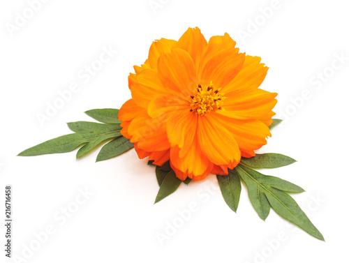 Foto Spatwand Gerbera Beautiful orange flower.