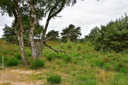 Foto Murales Maasduinen Holland Baum Landschaft