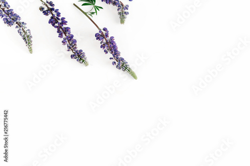 Pattern flowers purple wildflowers white background top view copy space - 216775442