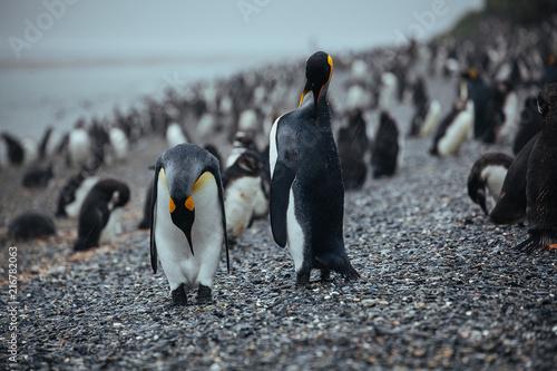 Foto Spatwand Antarctica Pinguin