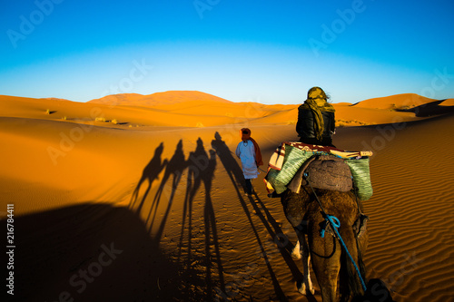 Fototapeta Tourist is riding a camel in caravan over the sand dunes in Sahara desert with strong camel shadows on a sand