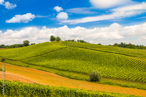 Foto Spatwand Wijngaard Green countryside landscape in Daruvar region, Croatia, vineyard on hills
