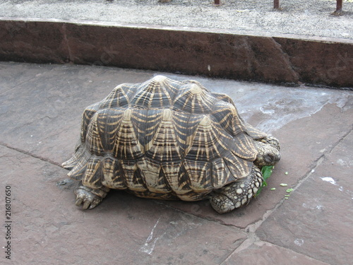 Foto Spatwand Schildpad Turtle India 2010
