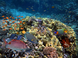 Marine Life in the Red Sea. - 216812824
