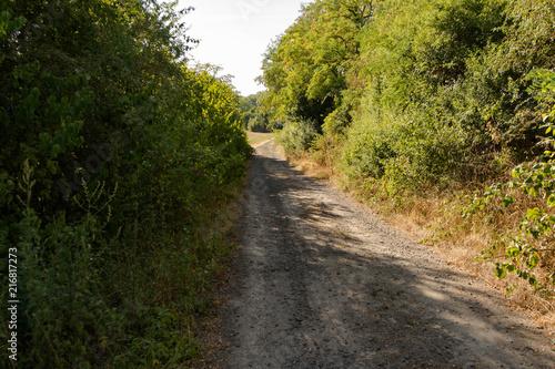 Foto Murales way through nature