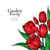 Tulip flower and leaves drawing border. Vector hand drawn floral frame.