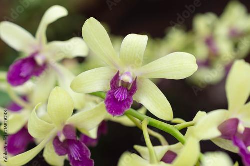 花・黄色・美しい・蘭・オーキッド - 216826238