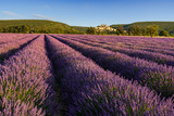 Lavender fields at sunrise with the village of Banon in summer. Alpes-de-Hautes-Provence, Alps, France - 216829463