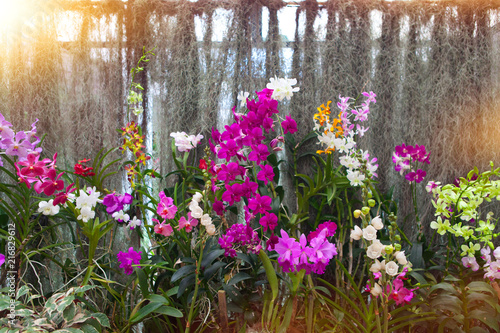orchid background - 216829612