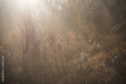 Morning lights in the foggy field