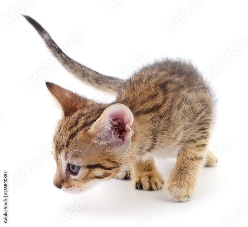 Foto Spatwand Kat Kitten on white background.