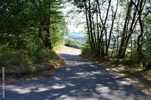 Feldweg am Waldrand - 216849691