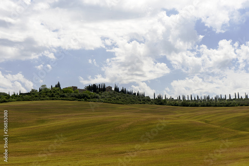 Fotobehang Toscane Green rolling hills in Tuscany