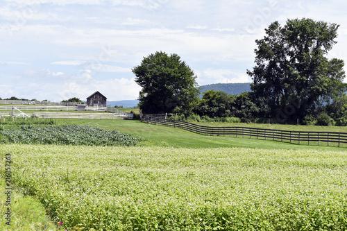 Foto Murales Scenic Farm Views (3)