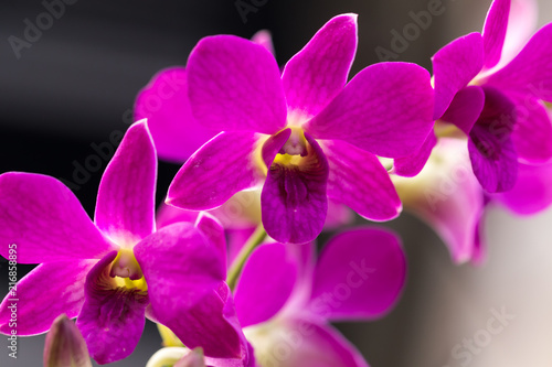 orchid pink flowers - 216858895