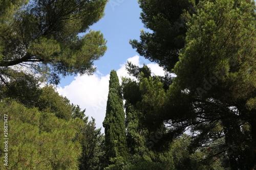 Foto Spatwand Zwart Cypress