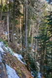 Mixed forest at steep mountain slope. Dombay, Russia. - 216873601