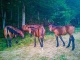 Cavalli al pascol in alta montagna