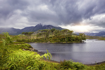 Pine Island, Connemara National Park