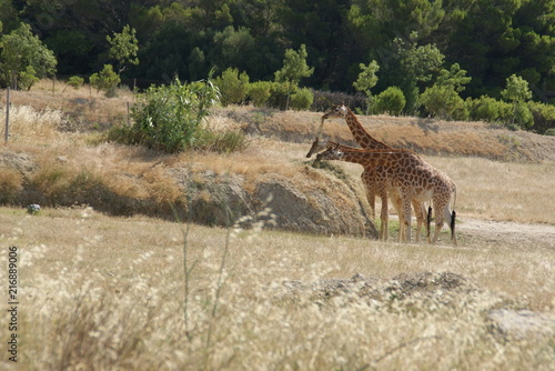 Canvas Hert Girafe
