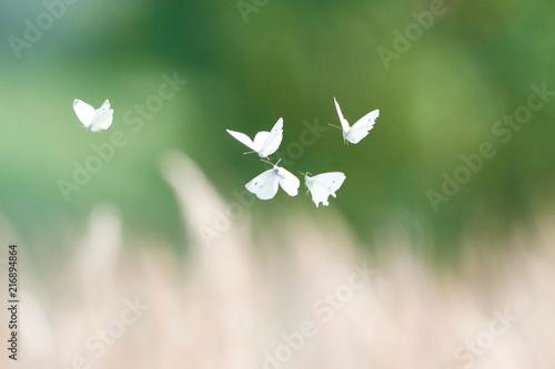 Canvas Vlinder Butterflies