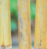 Yellow abstract bamboo sticks displayed in nature outdoors