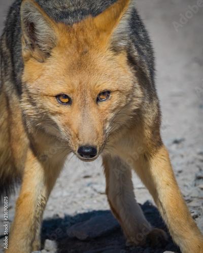 Aluminium Wolf Fox 9