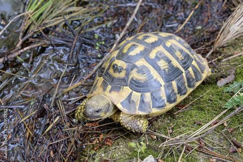 Foto Spatwand Schildpad La tortuga pasea