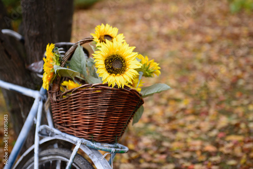 Aluminium Fiets Bouquet of sunflowers on retro styled bicycle at autumn forest.