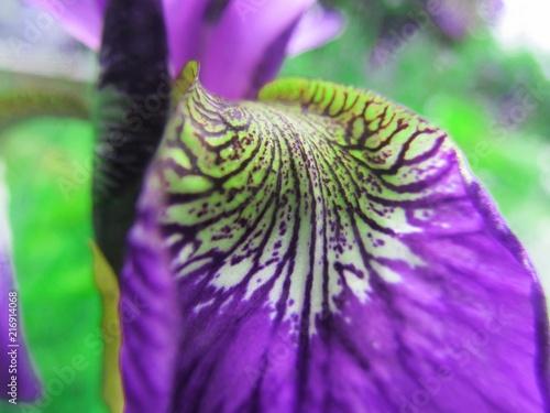 Aluminium Iris flower