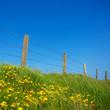 Leinwanddruck Bild - Irland zaun bei einer Weide am Meer