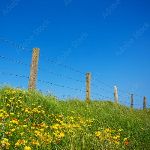 Leinwanddruck Bild Irland zaun bei einer Weide am Meer
