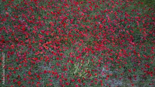 In de dag Klaprozen Poppies field