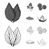 Ptrushka, black pepper, paprika, chili.Herbs and spices set collection icons in outline,monochrome style vector symbol stock illustration web. - 216936004