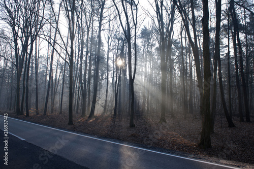 Fotobehang Weg in bos Jesień