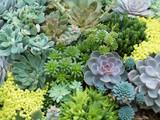 succulent, succulents, cactus, background, flower, beautiful, nature, garden, plant, aloe, botanical, decorative, green, flora, pattern, macro, summer, natural, fresh, leaf, desert, bloom, growth, bot