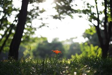 Beautiful korean wild flowers