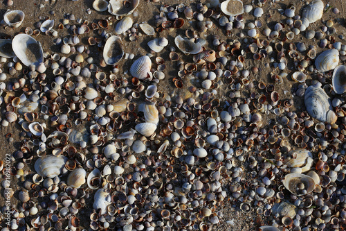 Foto Murales Shells on the sand.
