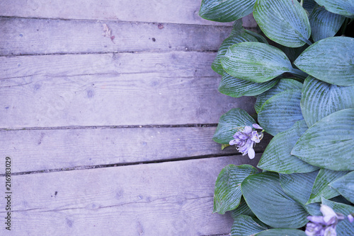 Aluminium Purper Large green leaves at the wooden path, top view.