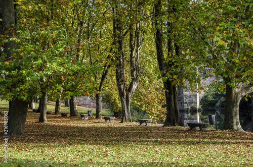 Fotobehang Herfst Hermoso bosque de otoño a orillas del río en Állariz, España.