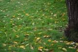 Herbstlaub auf einer Wiese