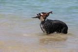 vacances d'été mer
