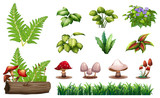 Set of forest plants