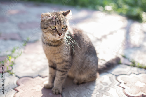 Foto Spatwand Kat Mother cat is sitting in the garden